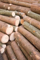 Baumfällung, Forstwirtschaft