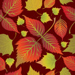 Seamless autumn leaves background. Thanksgiving