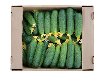 Cardboard box with cucumbers