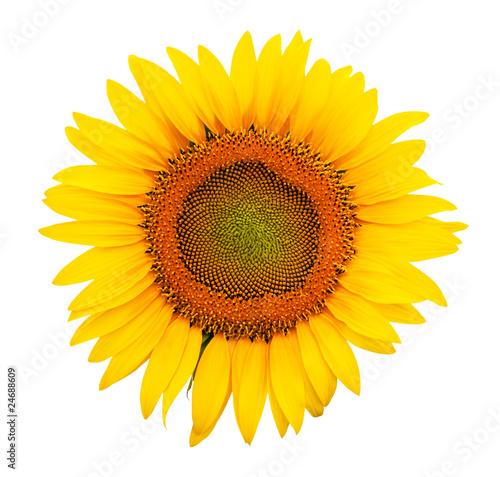 Papiers peints Tournesol Sunflower isolated