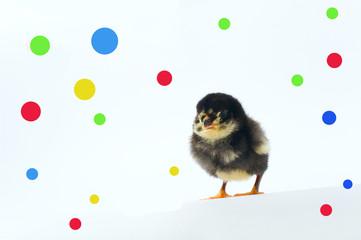 Chicken and confetti.