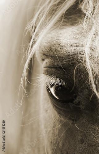 Fototapeten,pferd,pferd,schlagen,schlagen