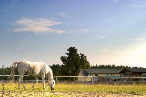 horse © TSpider