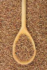 Buckwheat on the wooden spoon