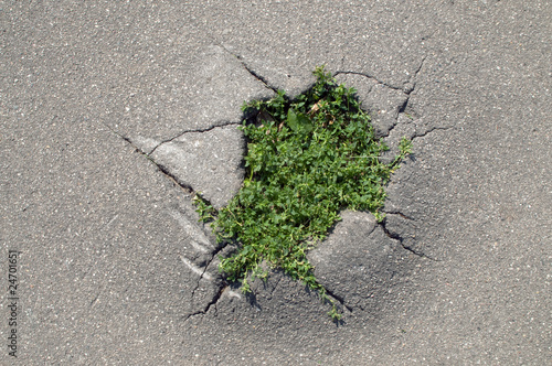 grass making a way through a crack of asphalt
