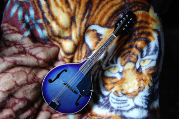 Have mandolin will travel