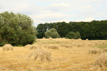 Harvest - sheafs of cereal on a field