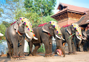 Gold caparisoned elephants for parade at the annual festival