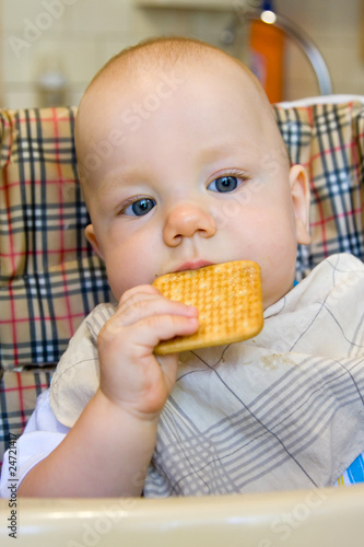 Baby is eating biscuit.