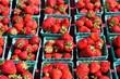 Strawberries in sunlight