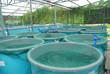 Leinwanddruck Bild - Agriculture aquaculture farm