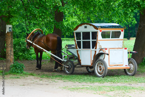 White vintage coach with horse in the park