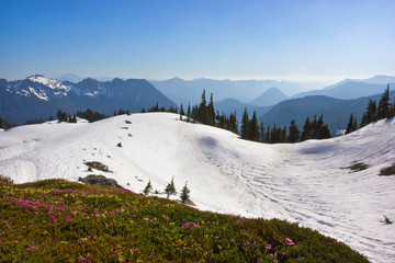 Snow Covered Mountains and wildflowers