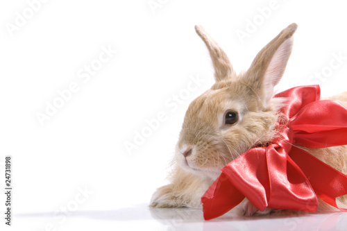 Decorated rabbit