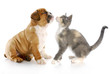 puppy and kitten love