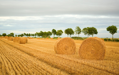 Golden hay bales in the countryside
