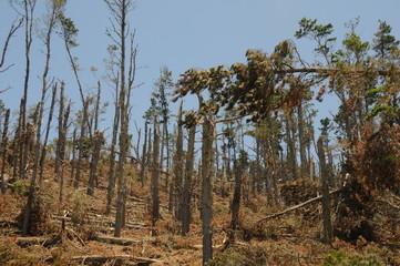 Wald nach Sturm