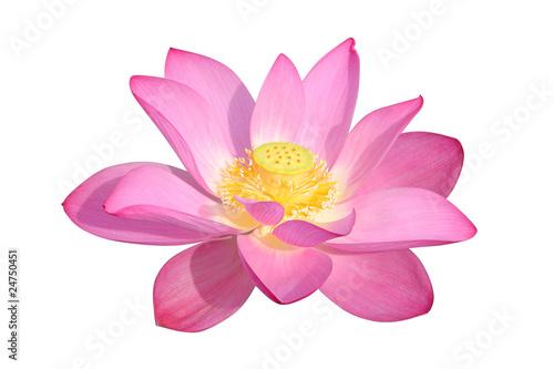 Poster Water planten lotus flower