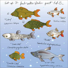set of vector freshwater fishs  1