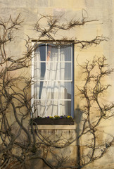 Window in Downing College Cambridge University.