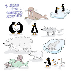 vector antartica animals illustration
