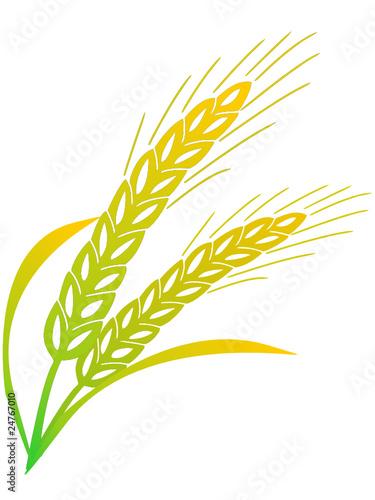Getreieähren