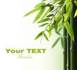 Fototapeten,bambus,hain,blatt,zen
