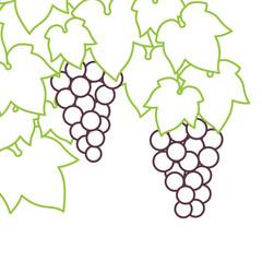 Raisins en contour