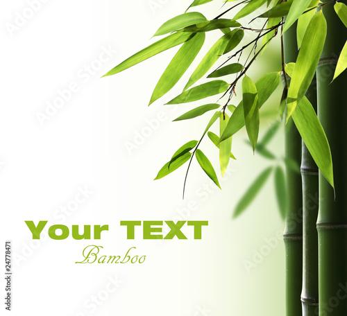 Leinwandbilder,bambus,hein,ausreisen,zen