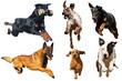 cinq chiens de races différentes en  plain saut