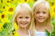 In sunflowers