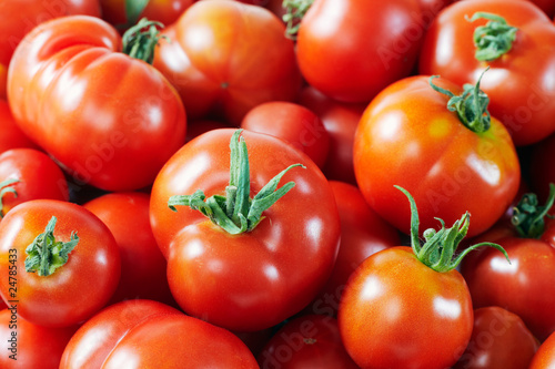 freshly gathered tomatoes 02