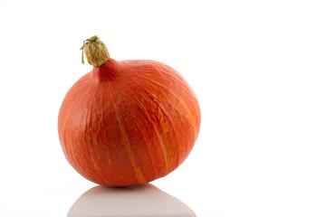 Isolated Pumpkin (lat. Cucurbita)