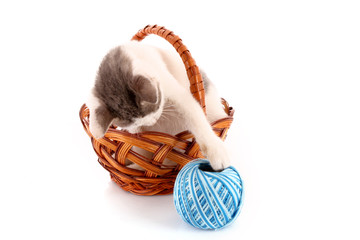 cat in basket and wool ball isolated on white