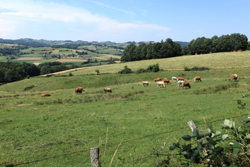 pré et vaches