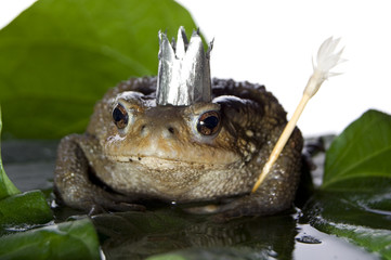 queen-frog