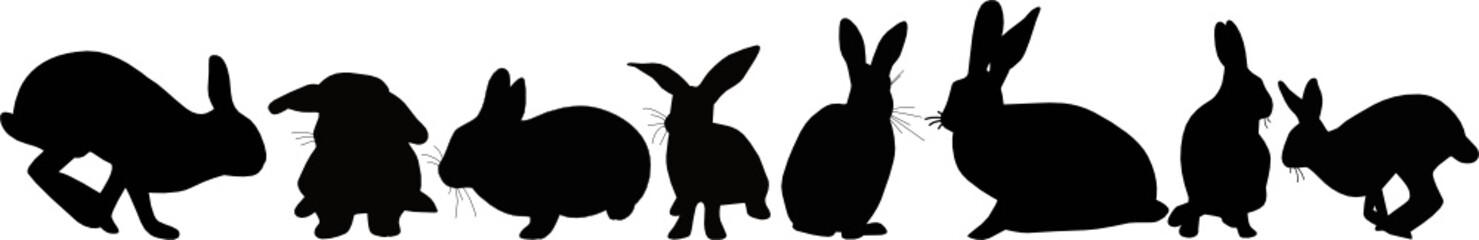 Hares an animal