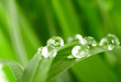 water drops on the green grass