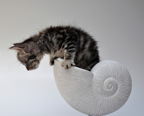 Nascita - gattina che esce dal nautilus