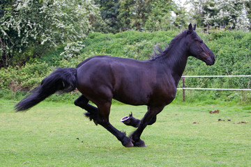 side view of a running horse
