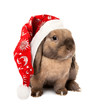 Rabbit in the New Year hat