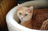 Cat relaxing in his warm fuzzy bed. poster