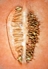 Microcosmo, interno del melone
