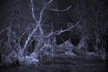 Scary landscape with dead tree