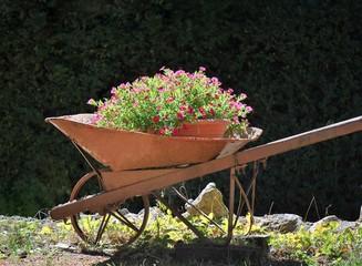 Fiori in una vecchia carriola in ferro