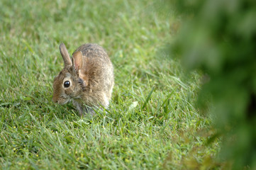 Rabbit sitting in the garden