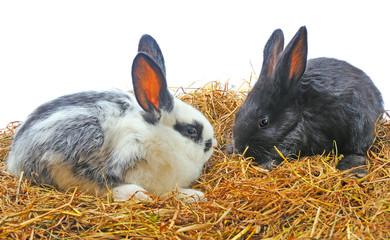 pair pretty rabbits