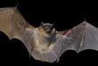 Bat 18