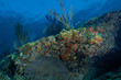 Sloping Coral Reef Ledge
