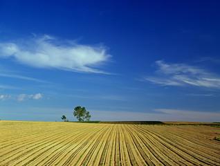 耕地と青空